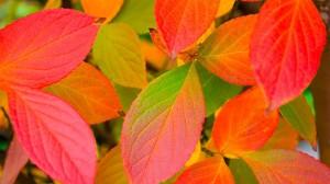 Autumn_leaves_colors-1920x1080