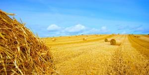 fotolia-fields-autumn