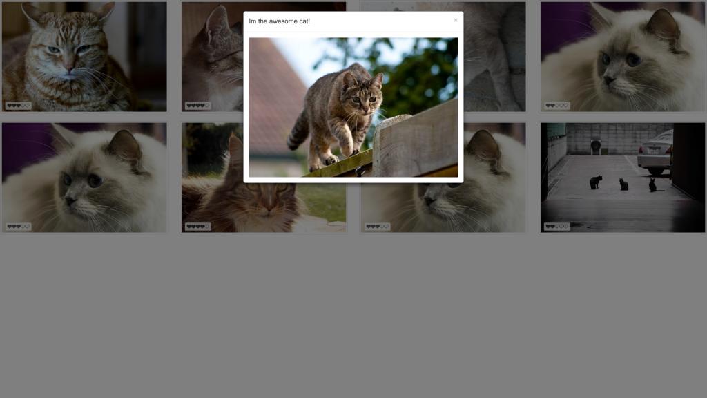 cats-1024x576