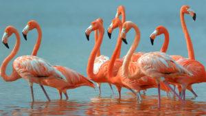 flamingo-webcam