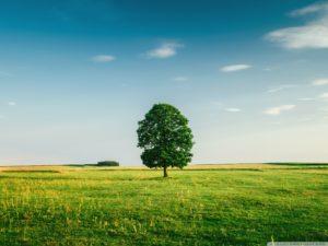 green_tree_4-wallpaper-1440x1080
