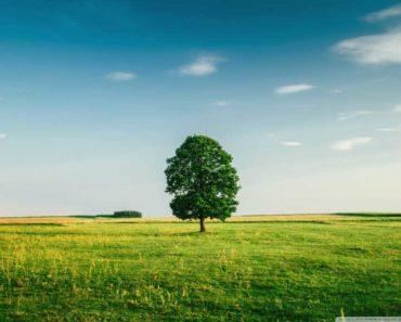 green_tree_4-wallpaper-1440x1080-768x576