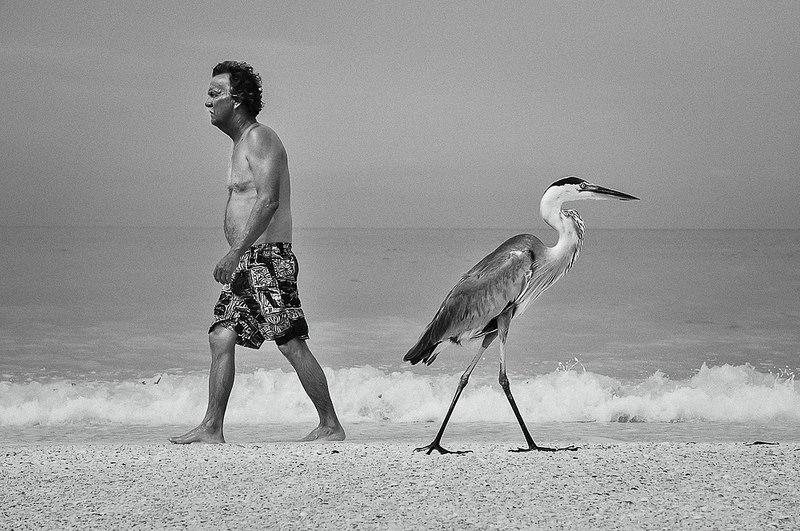 man walking by stork